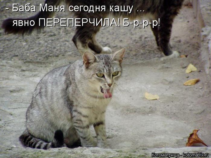 kotomatritsa_s (700x524, 341Kb)