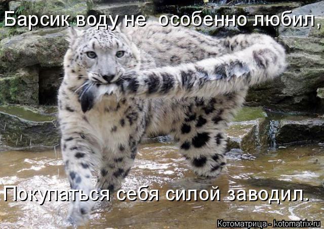 kotomatritsa_Tw (640x454, 273Kb)