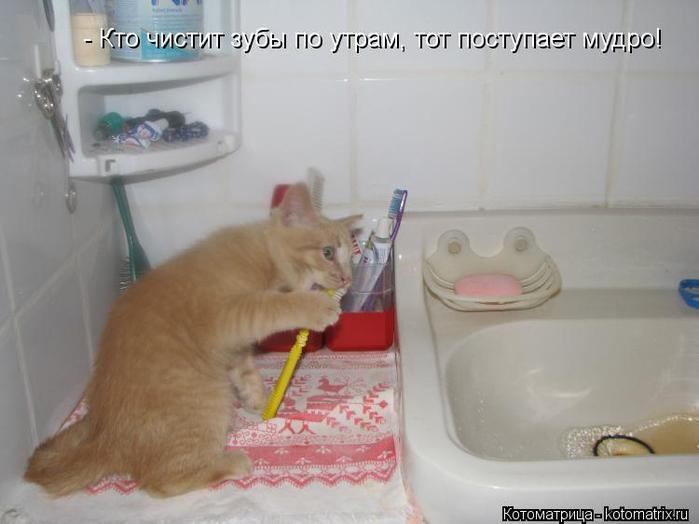 kotomatritsa_zv (700x524, 223Kb)