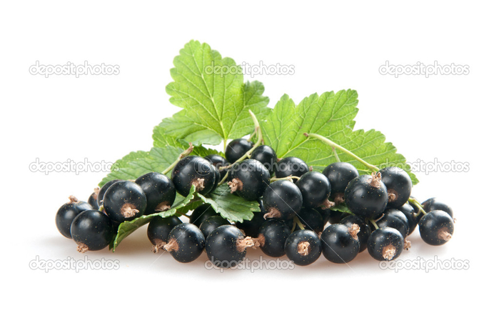depositphotos_6635765-Blackcurrant (700x466, 199Kb)