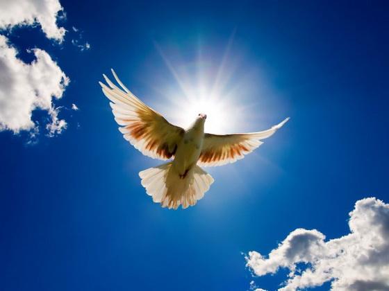 ты лети душа (560x420, 56Kb)
