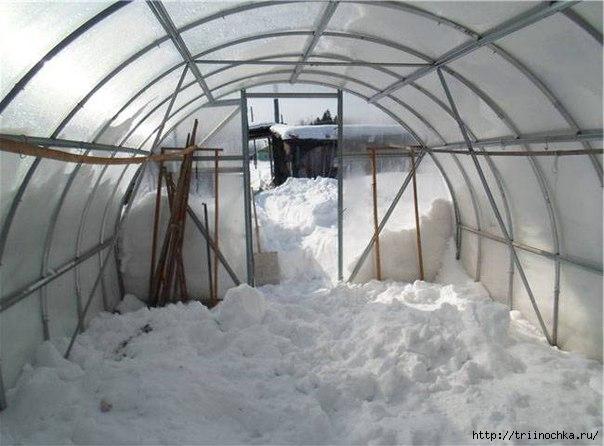 Закидаем теплицу снегом! Зачем?/4059776_Teplica (604x446, 131Kb)
