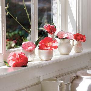 camellia-l1-300x300 (300x300, 31Kb)