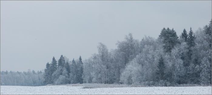 лес (700x315, 195Kb)