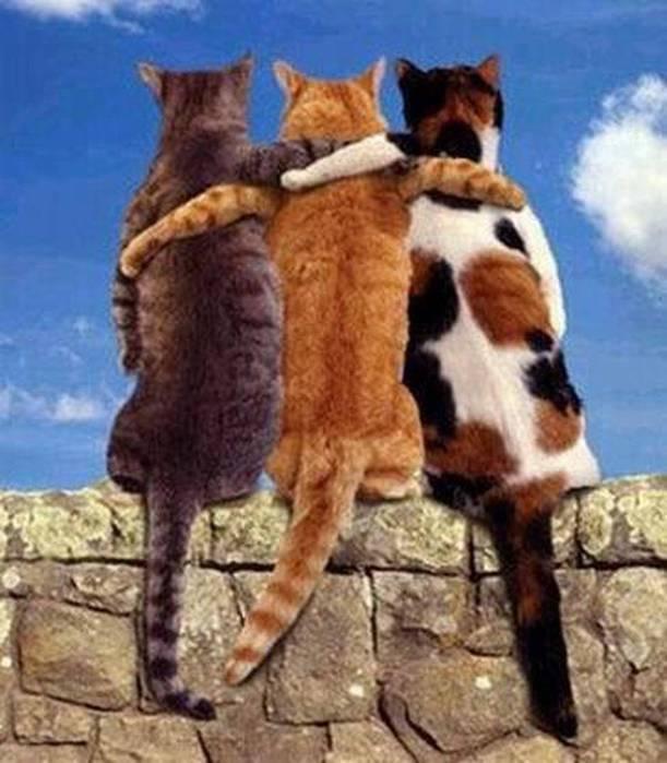 коты друзья (611x700, 55Kb)