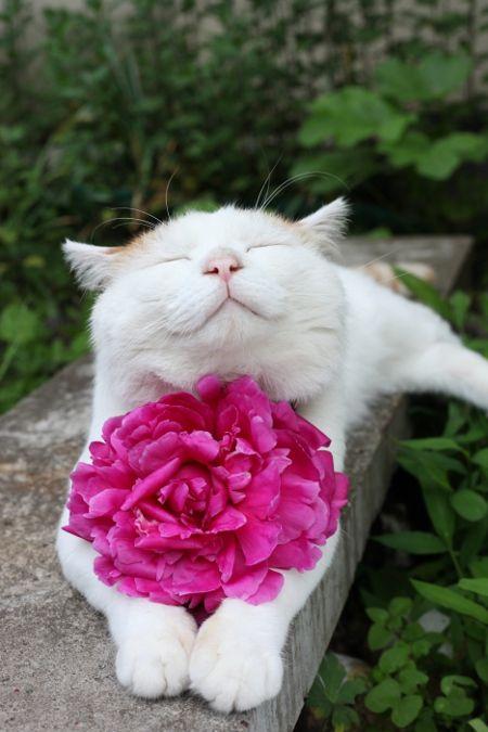 alt=кошки и цветы1 (450x675, 216Kb)