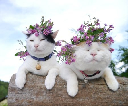 кошки и цветы2 (450x372, 126Kb)