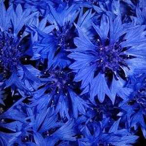 5701681_blue (300x300, 94Kb)