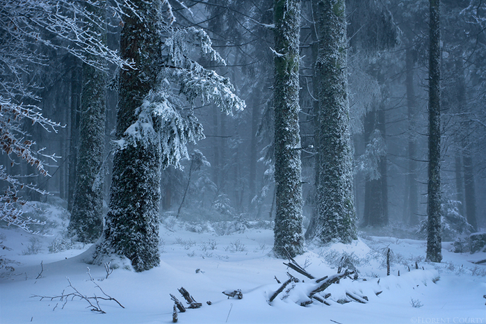 frozen_forest_by_lavaspawn-d4l651h (700x466, 505Kb)