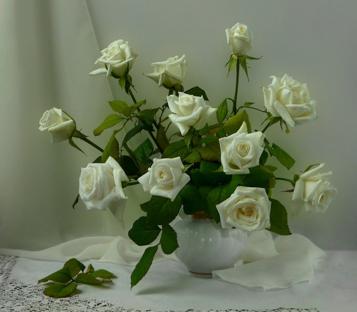 beauty_of_white_roses_nature_flora_still_hd-wallpaper-1497252 (700x611, 99Kb)