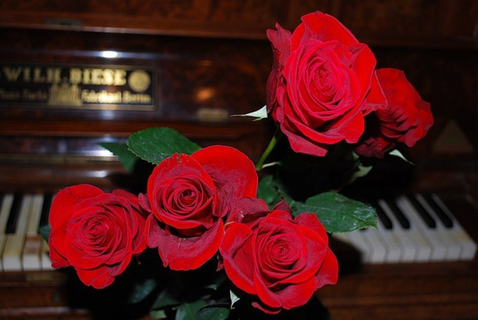 music_of_roses_song_piano_nature_flower_red_hd-wallpaper-1413910 (700x468, 67Kb)
