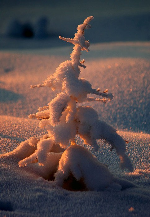 3303834_winter_1 (484x700, 83Kb)