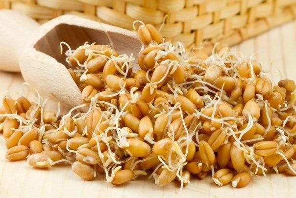 Проросшая пшеница лечит весь организм (604x403, 64Kb)