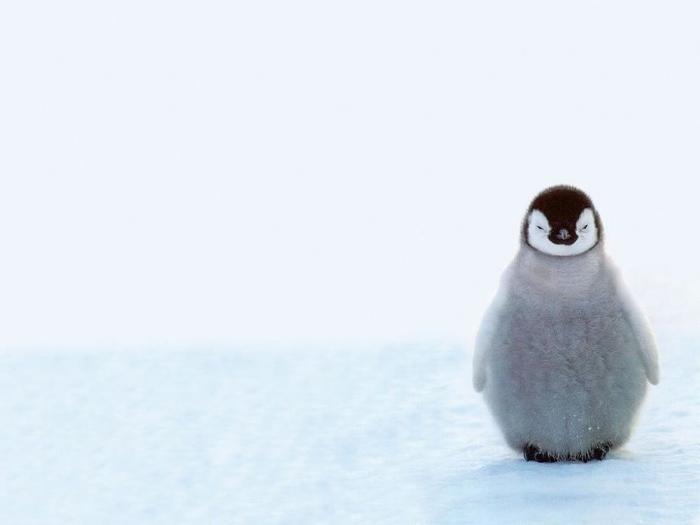 Penguins14 (700x525, 79Kb)