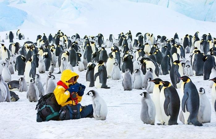 Penguins16 (700x449, 249Kb)