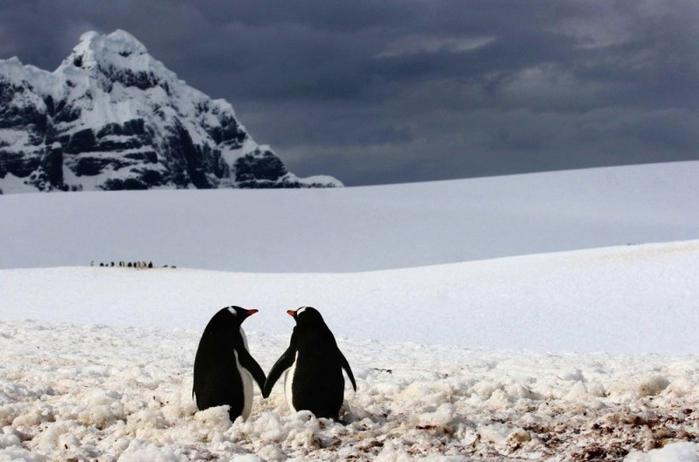 Penguins20-800x529 (700x462, 187Kb)