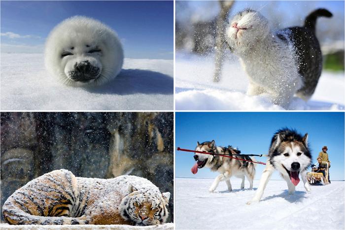 животные и снег 28 (700x466, 402Kb)