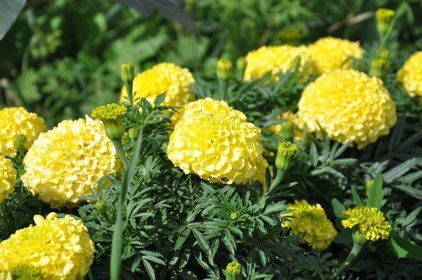 средства подкормки растений (604x401, 288Kb)