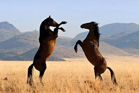 Лошади. преданность,грация,сила. 2 (285x190, 11Kb)