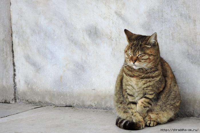 Котик (5) (700x466, 213Kb)