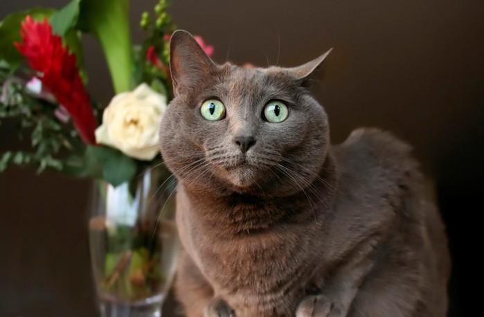 Почему кошки всё переворачивают? Ученые нашли этому факту научное объяснение