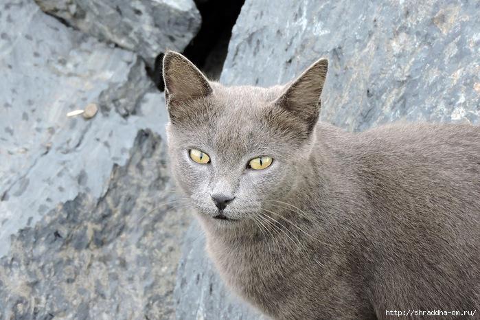 Котик (7) (700x466, 263Kb)