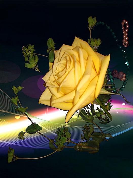Роза018 (525x700, 80Kb)