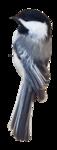 ������ 0_239599_6cbd5569_orig (190x500, 94Kb)