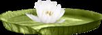 ������ 0_239653_c383d1ea_orig (700x243, 201Kb)
