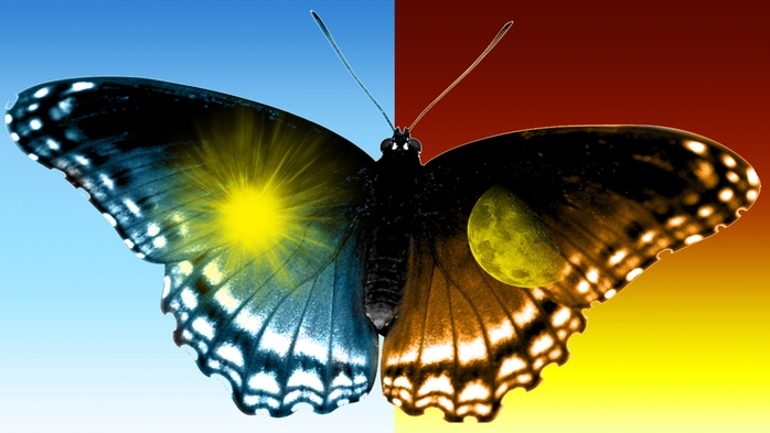 2961431_BeautifulButterfly_1_ (700x393, 162Kb)
