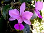 ������ Orhidea - 1 (12) (600x450, 264Kb)