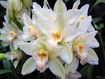 ������ Orhidea - 1 (600x450, 235Kb)