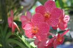 ������ orhideya_04_big (500x333, 147Kb)