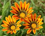������ exotic_flowers (500x397, 237Kb)