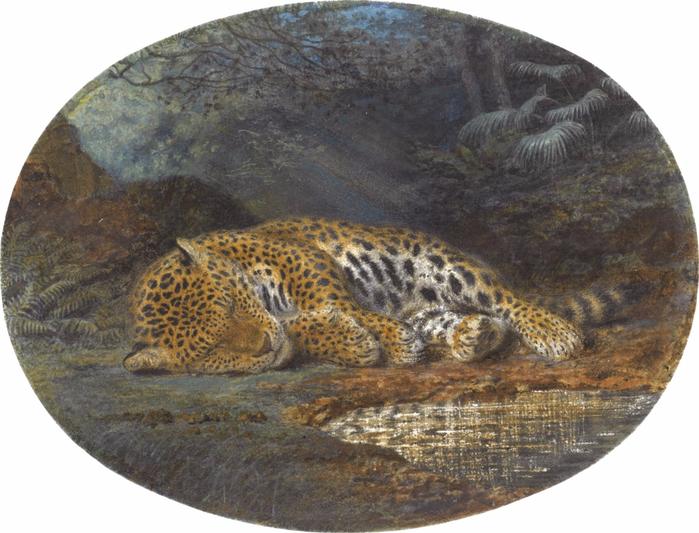 Английская школа (English School), 1859_Спящий леопард (A Sleeping Leopard)_13.4 х 18_акварель и корпусная краска_Частное собрание (700x533, 379Kb)