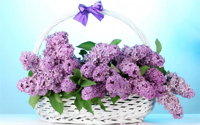 сирень тюльпаны 7 (700x437, 295Kb)