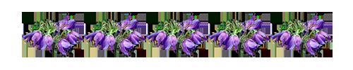 0_125f7c_db6c9f85_XL (500x100, 15Kb)