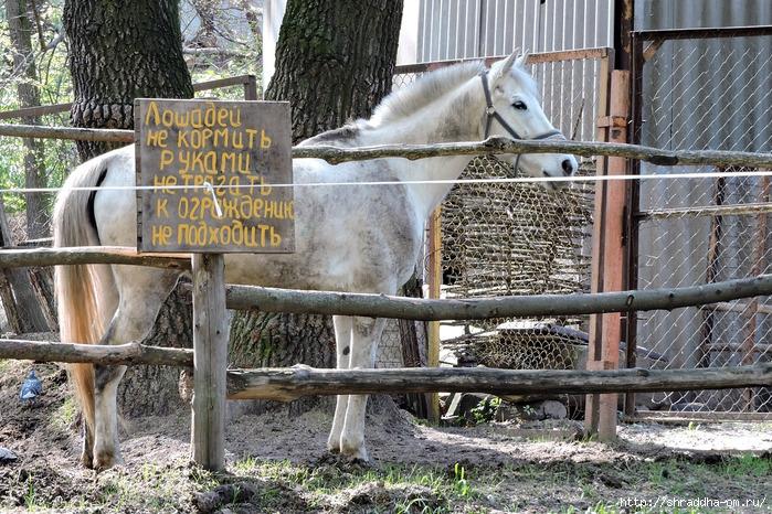 лошадь (1) (700x466, 392Kb)