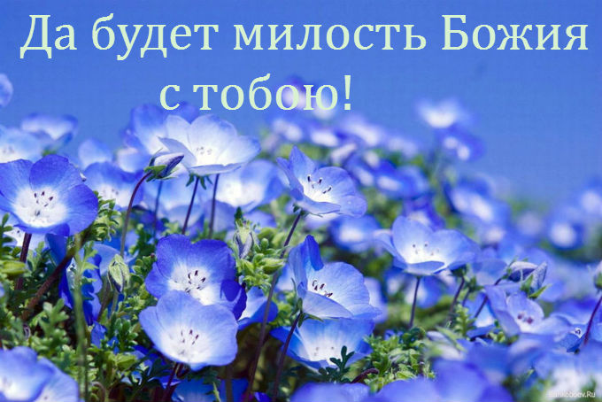 Fields_Of_Blue_Flowers_12� (680x454, 81Kb)