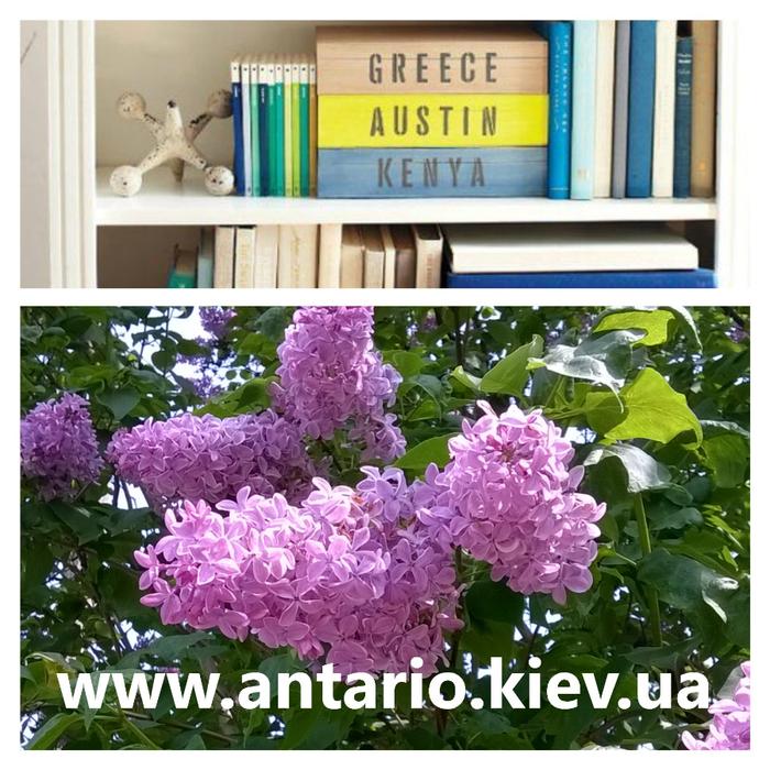 перевод греческий, португальский (700x700, 545Kb)
