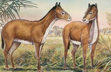 horseback (448x290, 35Kb)