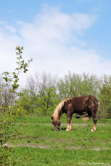лошадь (3) (466x700, 291Kb)