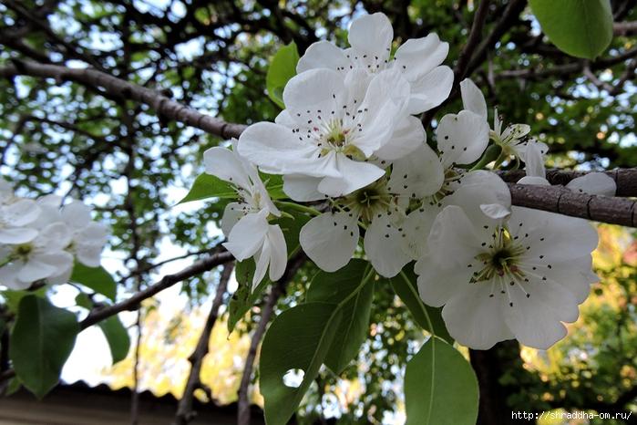 весна, май (16) (700x466, 303Kb)