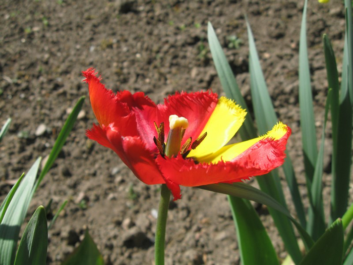 uu spring 002 (700x525, 372Kb)