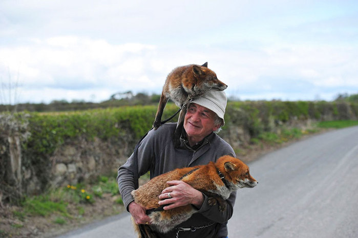 pet-foxes-rescue-patsy-gibbons-ireland-26 (700x465, 59Kb)