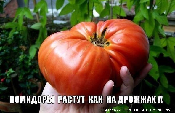 5177462_Image_9 (591x381, 173Kb)
