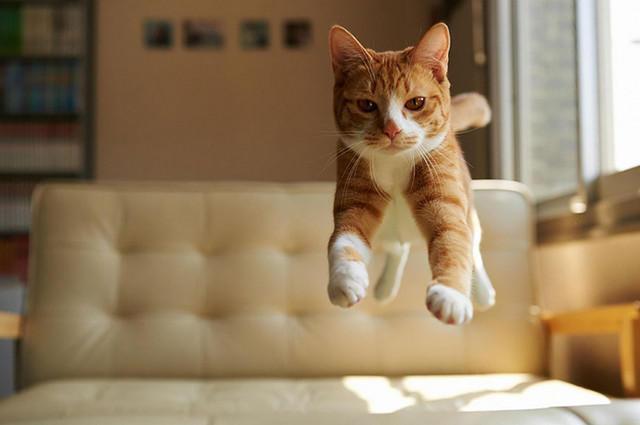 Кот летает5 (640x425, 104Kb)