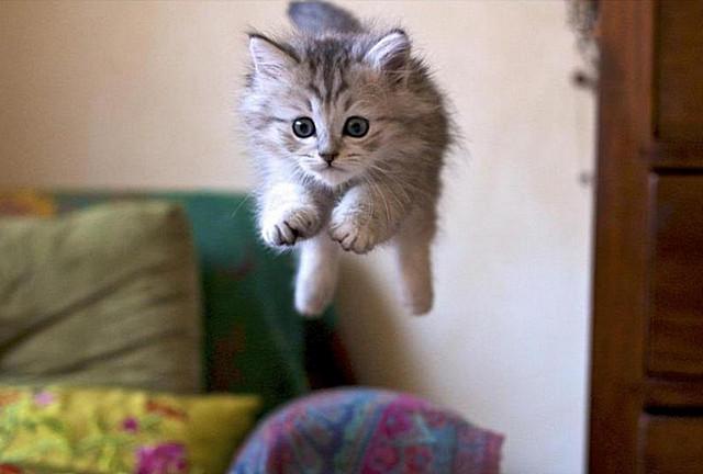 Кот летает11 (640x432, 121Kb)