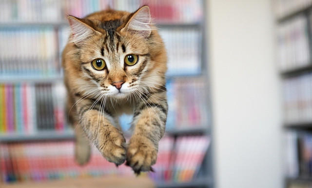 Кот летает17 (640x385, 115Kb)