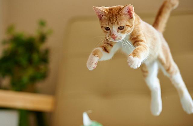 Кот летает19 (640x419, 93Kb)
